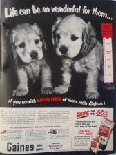 Dog food ad 1951